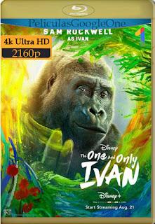 El único y gran Iván (2020) [4K WEB-DL-HDR] [Latino-Inglés] [LaPipiotaHD]