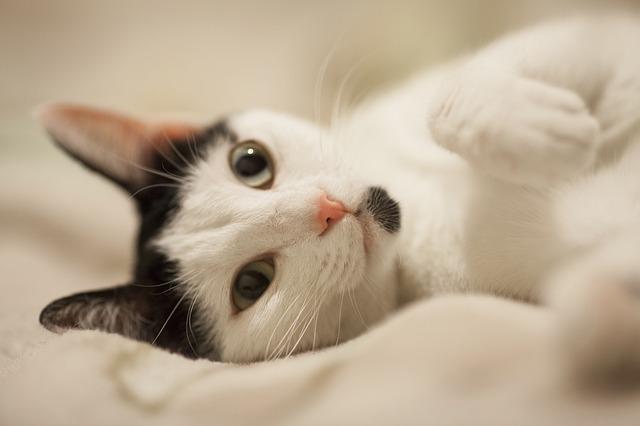 Ciri Ciri Kucing Hamil Yang Akan Melahirkan Di Rumah