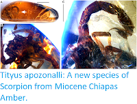 https://sciencythoughts.blogspot.com/2015/08/tityus-apozonalli-new-species-of.html