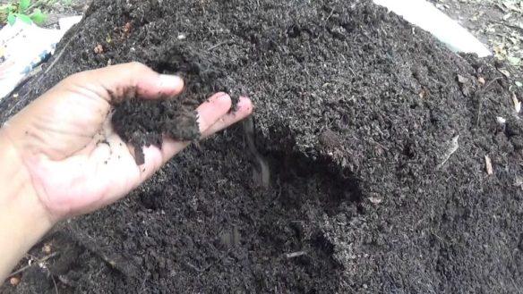 √ Cara Membuat Pupuk Kompos Dari Sekam Padi Beserta Manfaatnya!