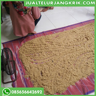 Telur Jangkrik Bandung