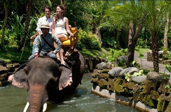 Harga Tiket Masuk Taman Safari Prigen Juli S D Agst 2019