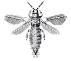 Bugs News: Tiny, Yellow, Biting Bugs