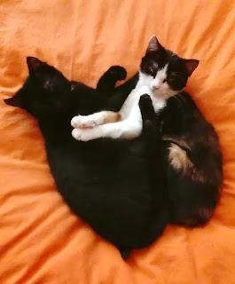 Bella, Edward, kittens, Dierentehuis