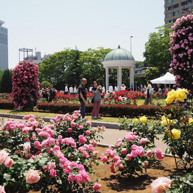 横須賀 ヴェルニー公園 バラ