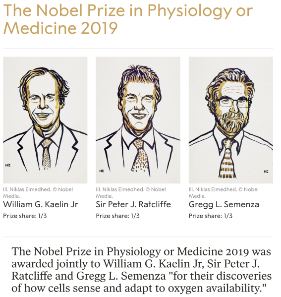 2019 Nobel Prize in Physiology or Medicine