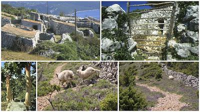 pecore di Cherso
