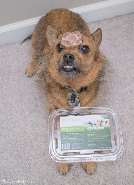 Mini Review: Dr. Tim's Natural Oxtail Chip Dog Treats