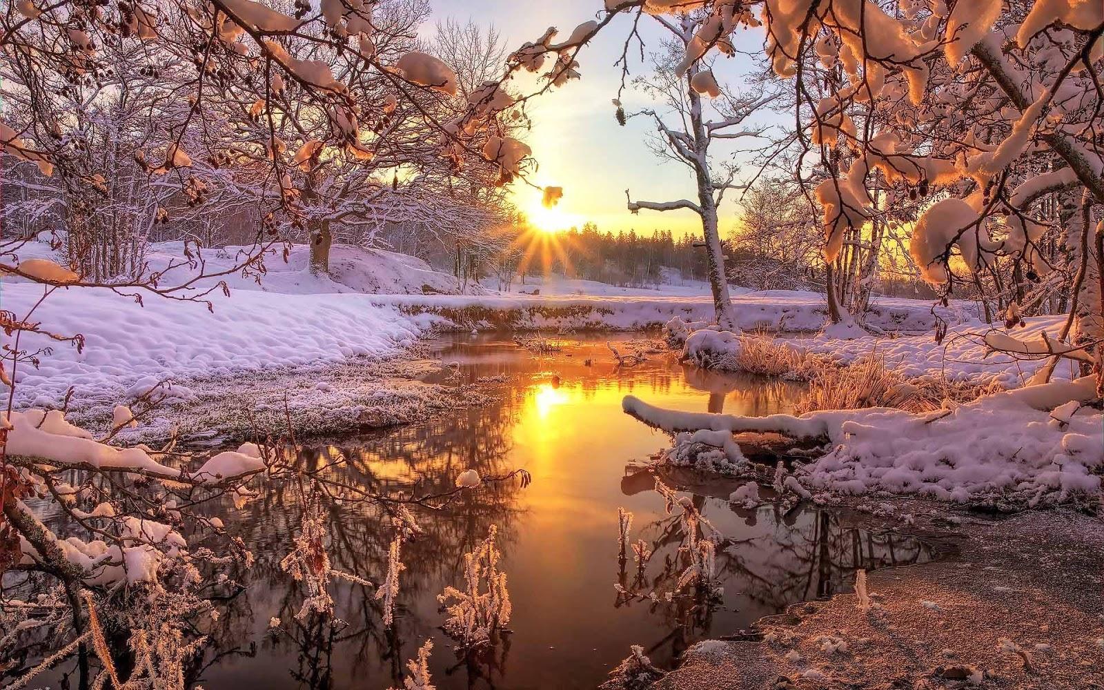 Sloot met bomen in de winter met ondergaande zon