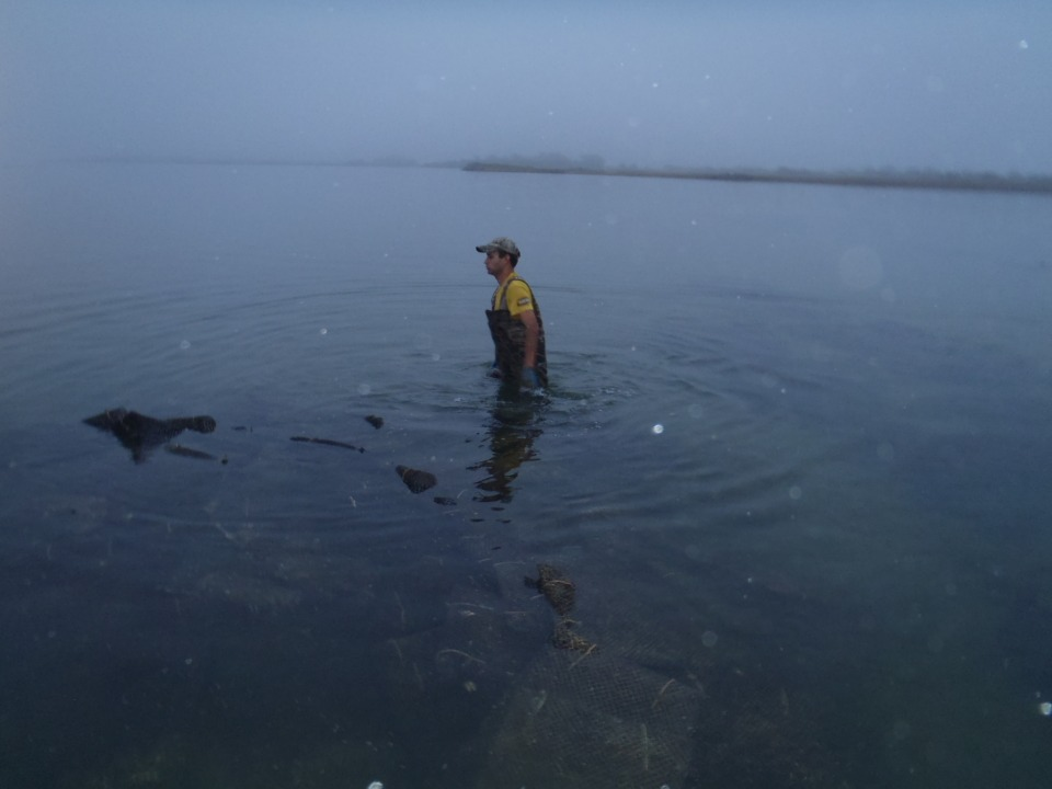 Massachusetts Oyster Project Seasonal Oyster Jobs in Scenic Rhode Island