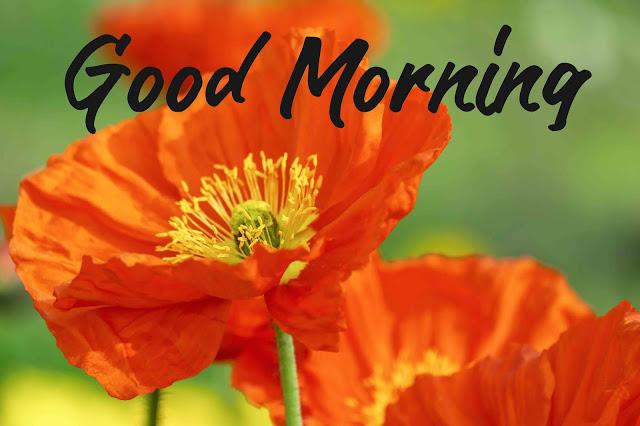 good morning images jasmine flower