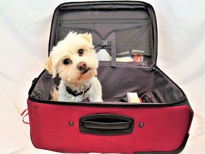 Prevent dog theft when traveling, Pet theft is on the rise, Stolen dogs,