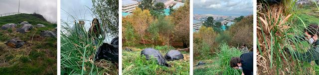 Fotografías durante o voluntario, eliminando as plantas invasoras