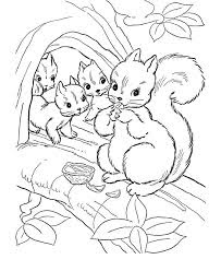 Best Ideas Squirrel Animals Coloring Pages For Kids