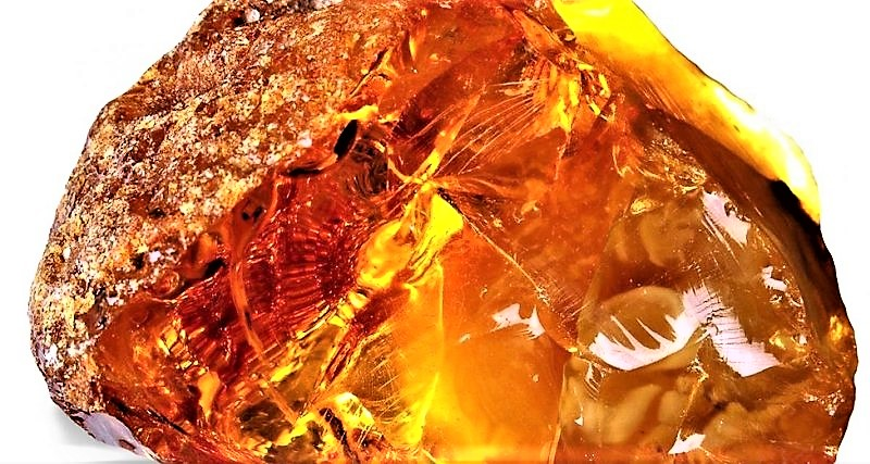 Mesozoic bird was found in amber picture.