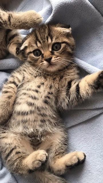 osm cat pictures