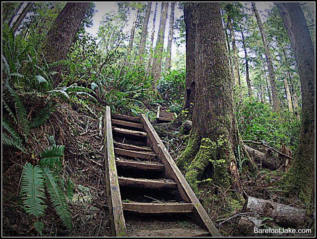 olympic coast stairs