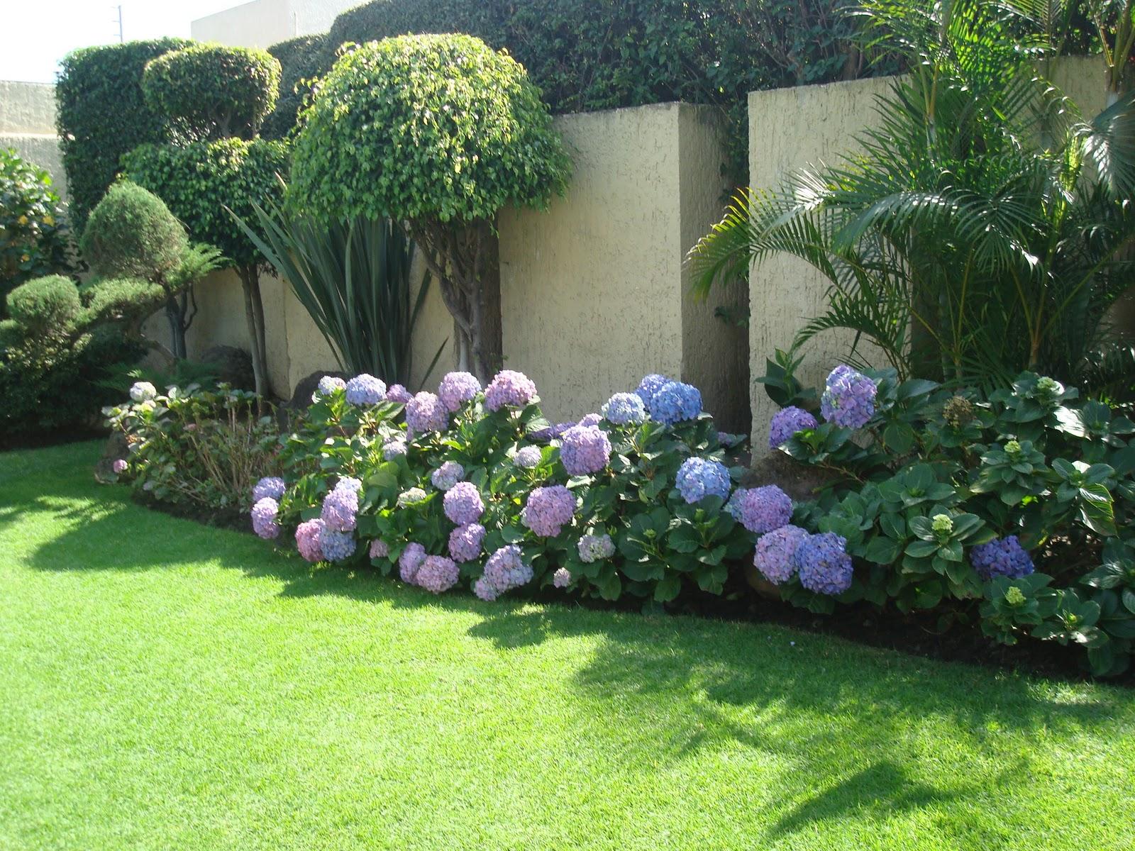 Sancarlosfortin flores de hortensias azules y jardin en - Piccoli giardini moderni ...