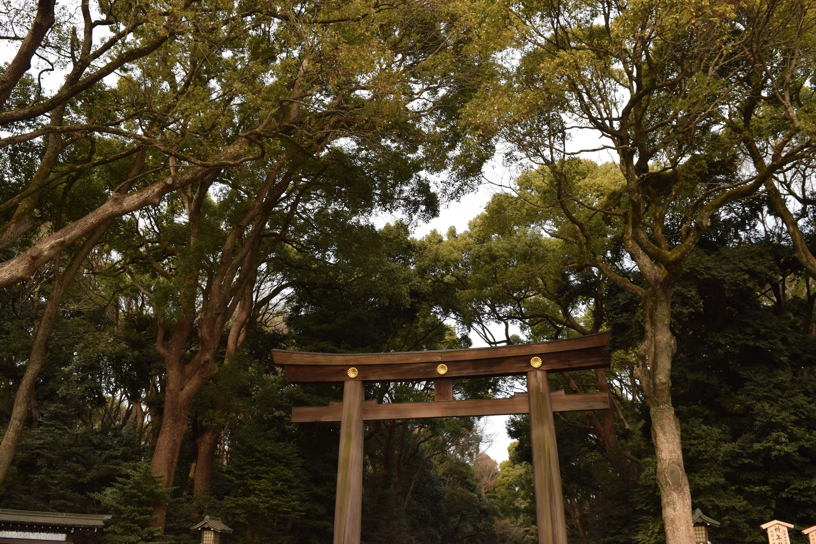 Torii Shrine gate of Meiji Jingu