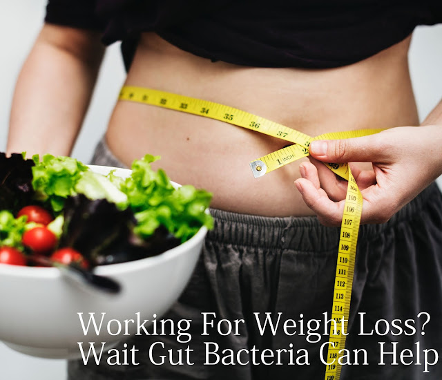Working For Weight Loss Wait Gut Bacteria Can Help !
