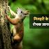 गिलहरी के बारे में 30 रोचक जानकारी - Information About Squirrel In Hindi
