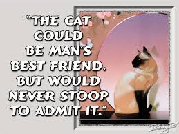 cat quotes the cat could be man's best friend,