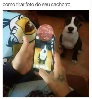 foto do seu cachorro