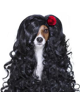 alan • köpekler • beyaz • yaz • bak • çiçekler • ruh hali • glade • siyah • iki • Maki• köpek • çayır • köpek • çift • kırmızı • bir çift • Labrador • iki • namlu • köpek • köpek • Labradorlar • arka plan bulanık • iki köpek • haşhaş alan • yakışıklı • köpek • iki köpek