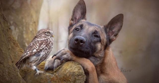 Эта парочка лучшие друзья: трогательная история совы Польди и собаки Инго!