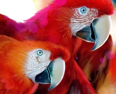 funny cheeky parrots joke picture