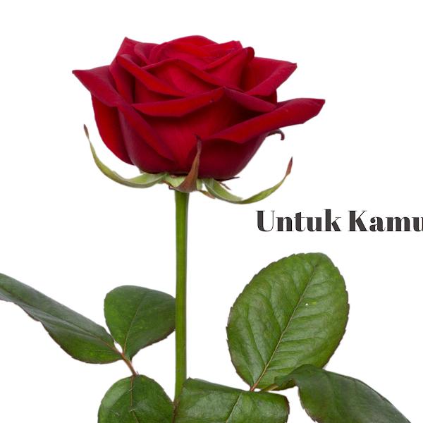 Untuk Kamu