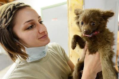 Meningitis In Dogs | Treatment Of Meningitis In Dog