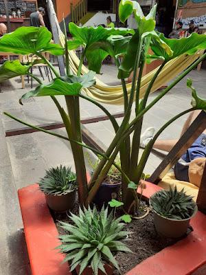Plantas del hostel Dragonfly