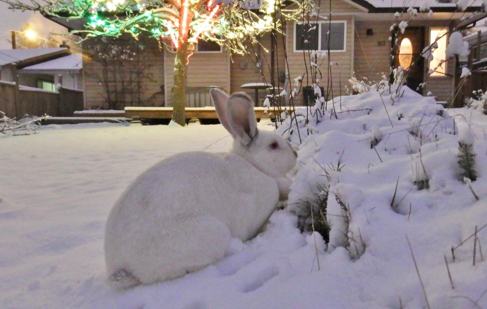 The Christmas Bunny.Brightfish Charters The Christmas Bunny