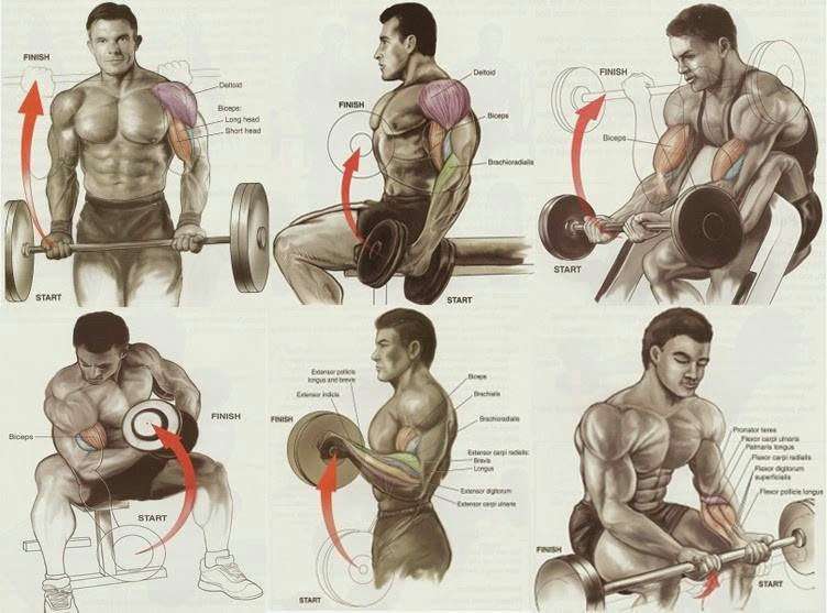 Best Exercises for Biceps Workout ~ B