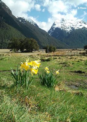Flores en un valle de la Isla Sur de Nueva Zelanda