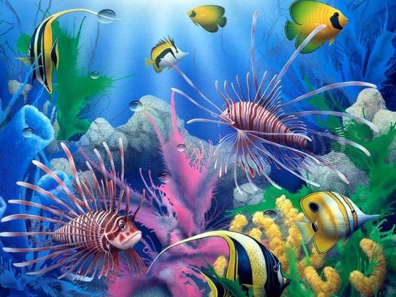 Ocean Biome Plants And Animals