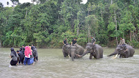 Konservasi Sekaligus Wisata Bersama Empat Gajah di CRU Sampoiniet Aceh Jaya