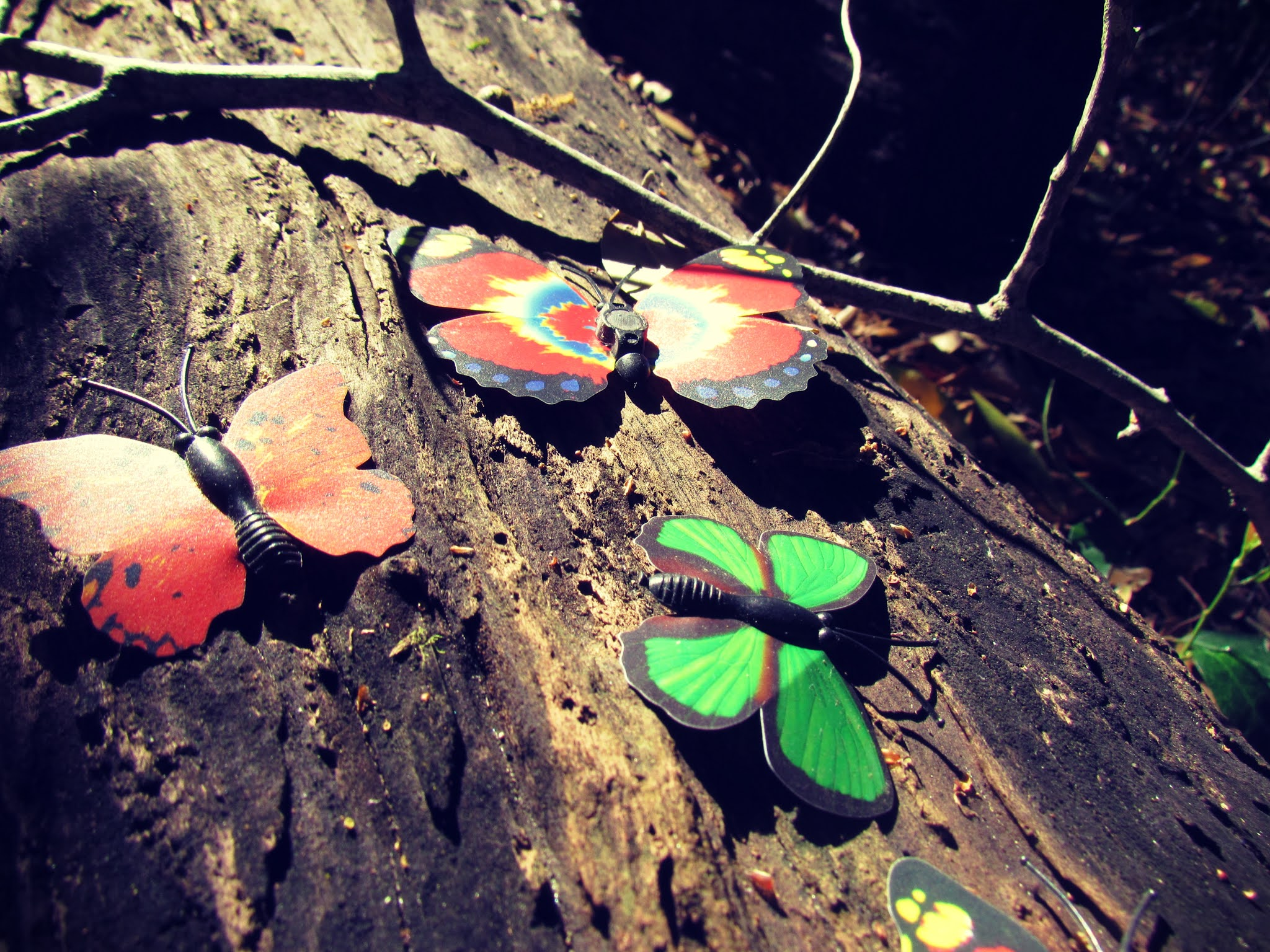 Colorful butterfly magnets on a wooden log in mother nature surrounded by the magic of trees