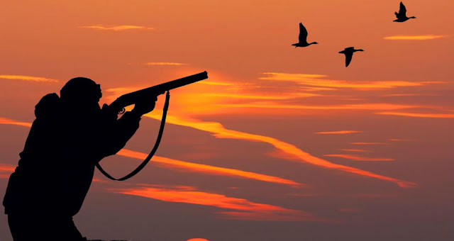 Οικολόγοι Πράσινοι: Απαγόρευση των μολύβδινων βλημάτων από τους κυνηγούς σε περιοχές υγροτόπων