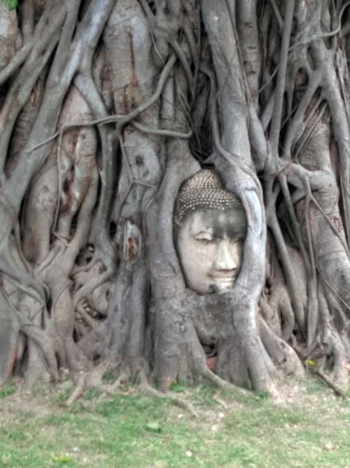 木の根の間に埋め込まれた仏像の頭@ワット・マハタート