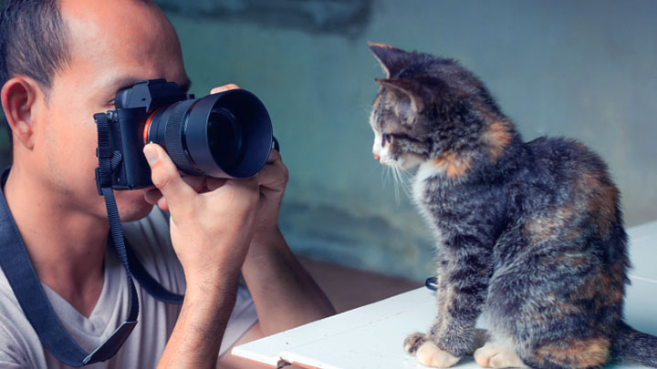 pet photography props