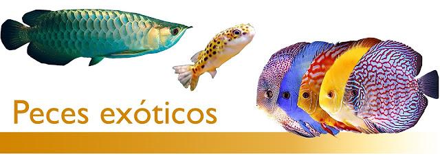 http://www.acuarioamazonic.com/2017/08/peces-exoticos.html