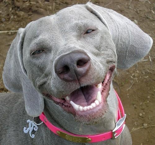 Rankmaniac 2012: Cute dogs smiling