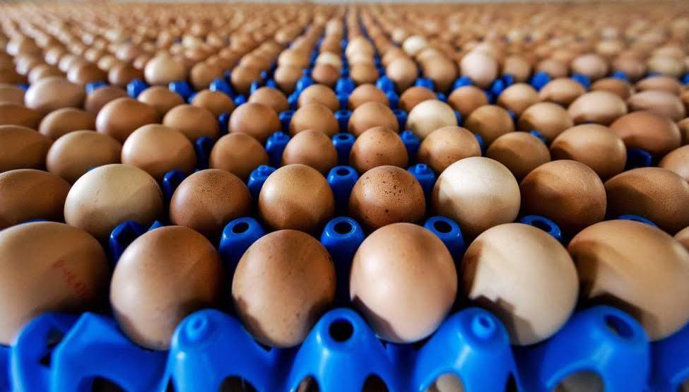 200 milioni di uova contaminate dalla Salmonella ritirate dal mercato USA