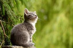 Kucing Bikin mandul ?