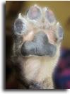 Macam-Macam Penyakit Kulit pada Anjing dan Penjelasannya