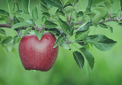 benefits of apple, apple for health benefits, the benefits of an apple for health