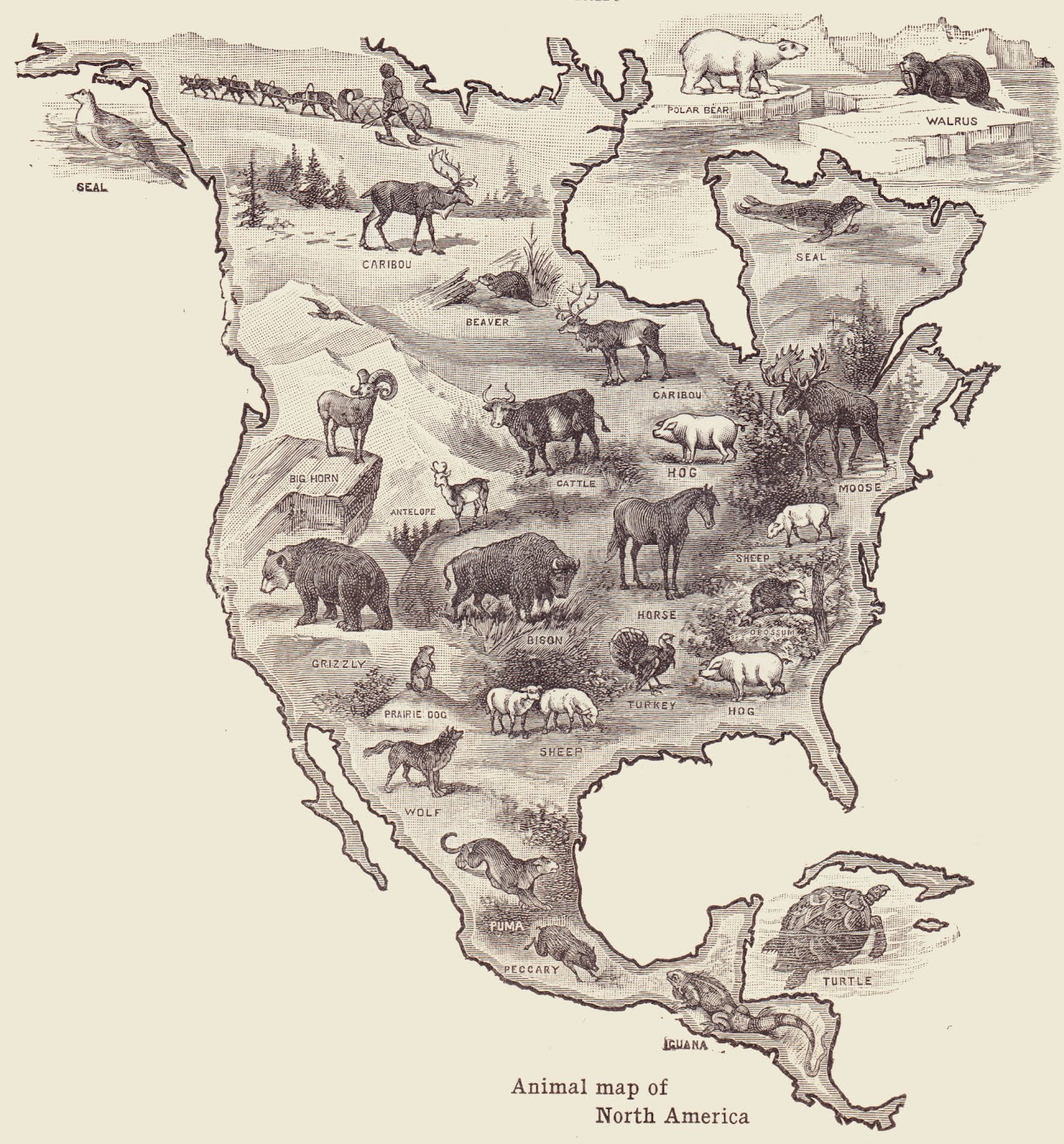 map of animals