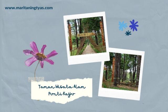 taman wisata alam punti kayu palembang sangat adem